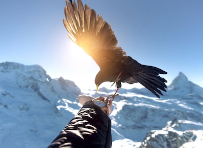 Eagle on hand behind snow mountains