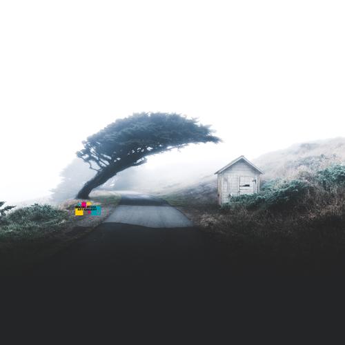 tree house california outdoor